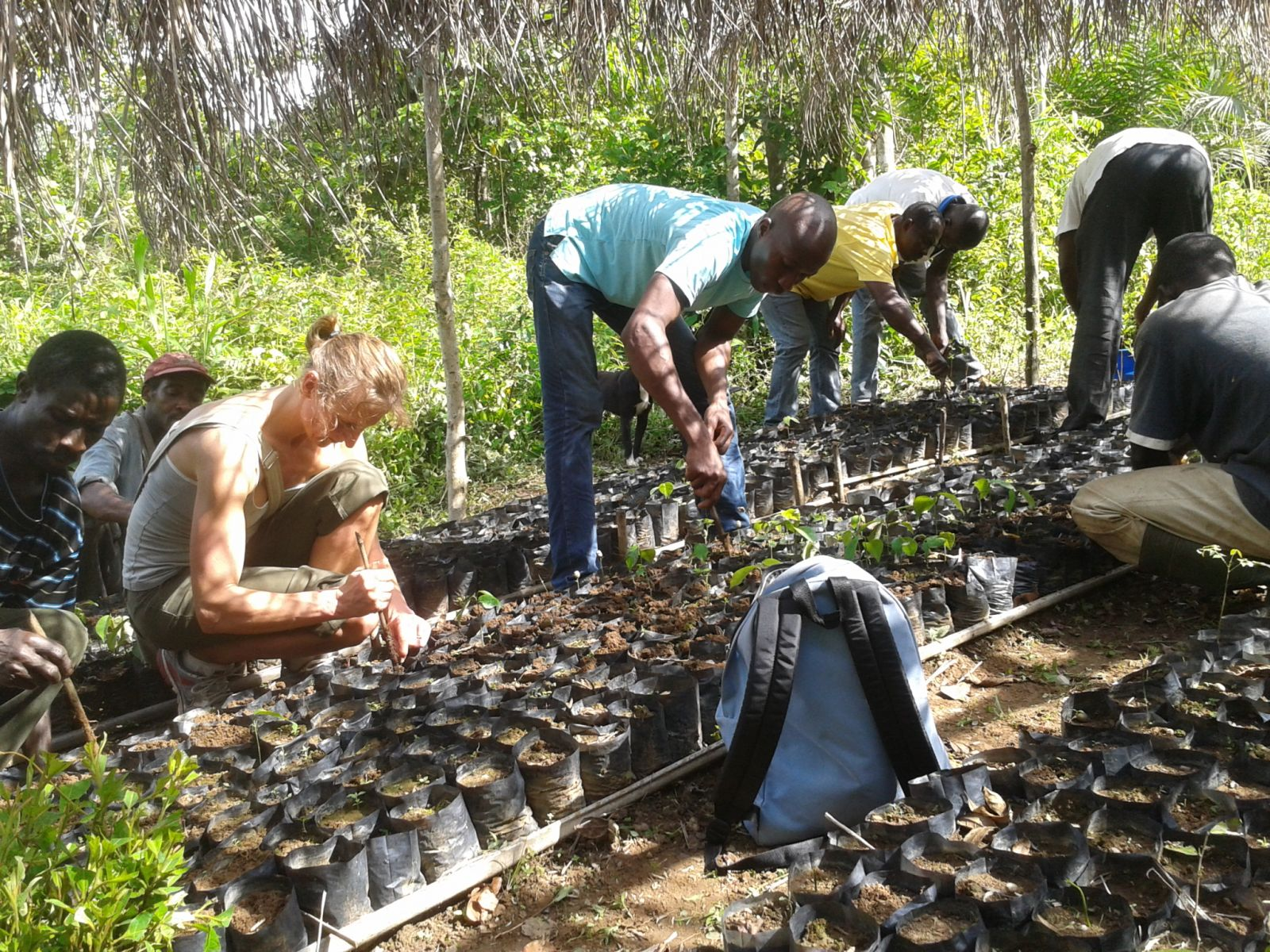 Togo : La Forêt
