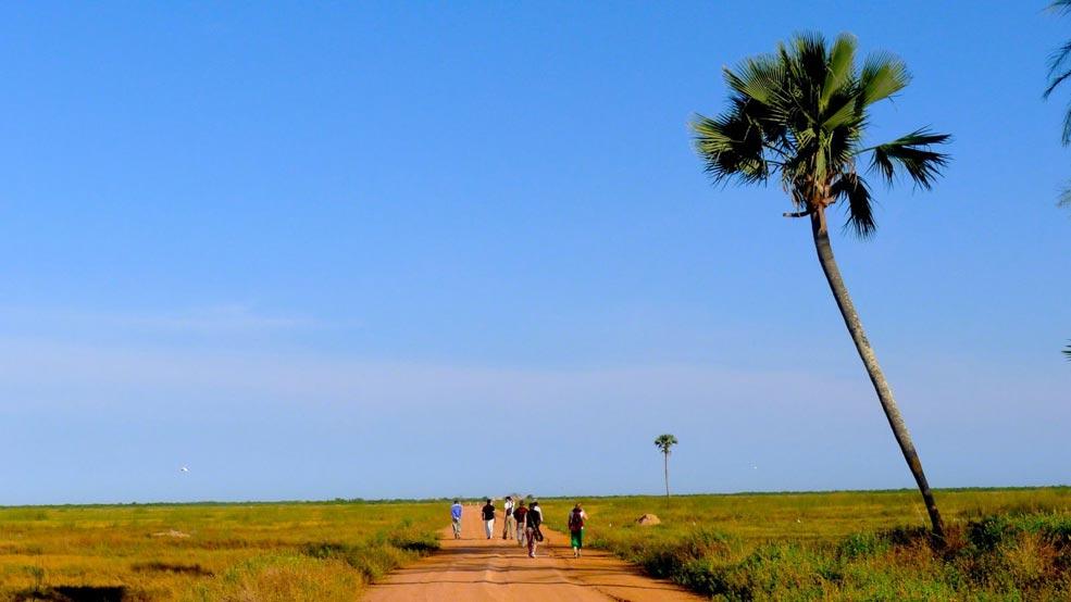 Rizières de Seleki Casamance