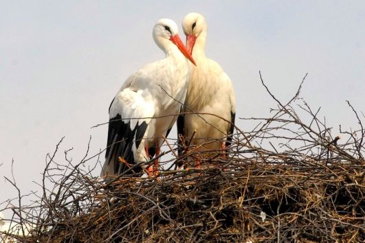 Croatie : Séjour au Parc Naturel de Posavina