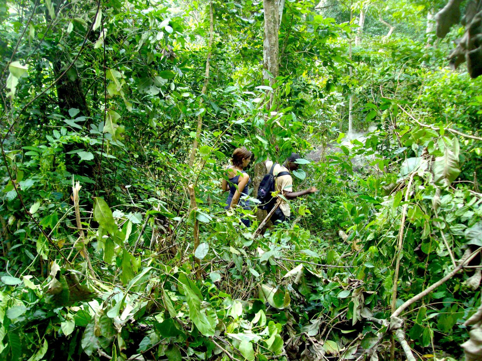 Togo : Fraîcheur et forêt du Togo