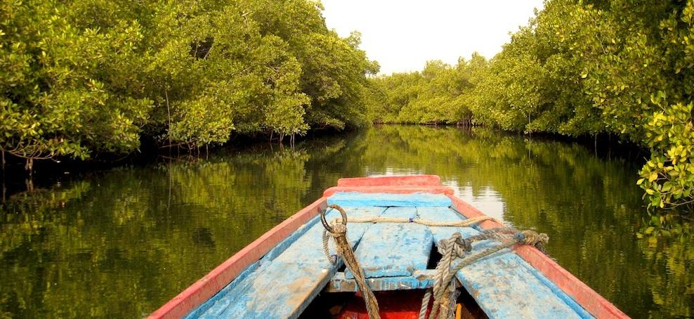 Rando Pirogue dans le delta du Saloum