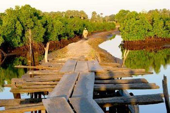 Ponton sur la Mangrove à Enampor Casamance
