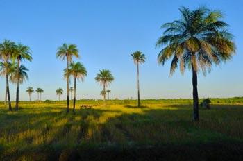 Île de Haer, Casamance