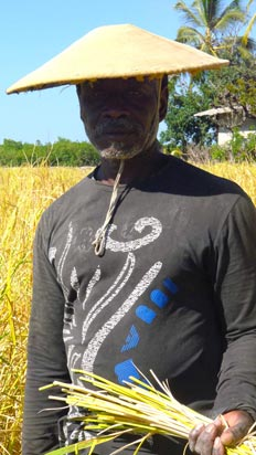 Riziculteur diola Casamance